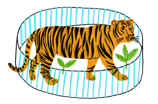 tigre_cage